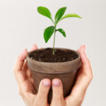 manos sosteniendo una maceta con una planta.